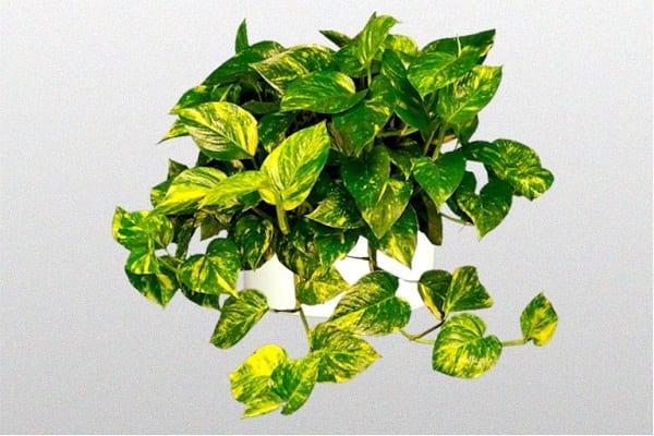 17 Plantes d'Intérieur Qui Poussent SANS Lumière du Soleil