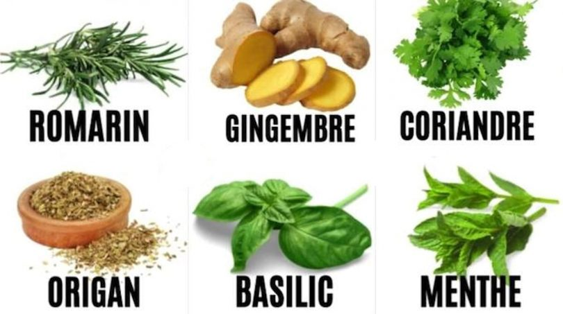 10 Plantes Qui Soignent (et Laquelle Utiliser Selon Vos Symptômes)
