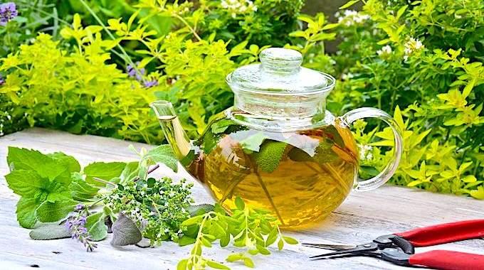 26 Plantes Faciles à Faire Pousser Pour Faire Vos Propres Tisanes