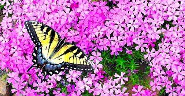 Papillons : 10 Belles Fleurs Pour Les Attirer Dans Son Jardin