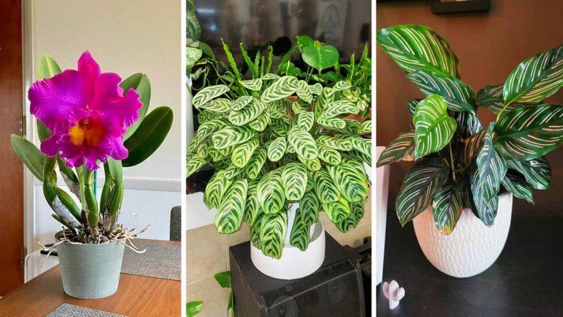 10 Plantes qui peuvent absorber l'humidité de la maison