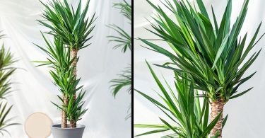15 Plantes pour ceux qui n'ont pas le temps de les arroser