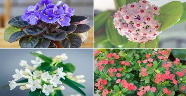 6 plantes d'intérieur qui résistent à l'air sec et à la poussière