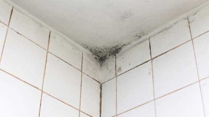 Moisissures Salle de Bain : 7 Astuces Nettoyage (Pour les Supprimer Facilement)