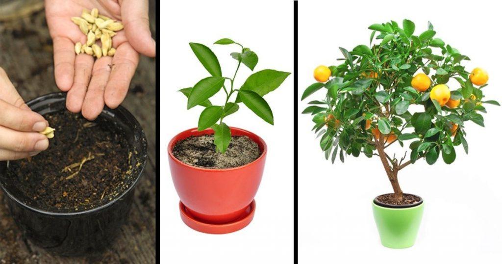 Tu peux facilement faire pousser ces 8 arbres fruitiers à partir des graines de tes propres fruits