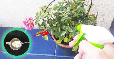 Une astuce magique au bicarbonate de soude pour avoir de belles plantes (même en hiver)